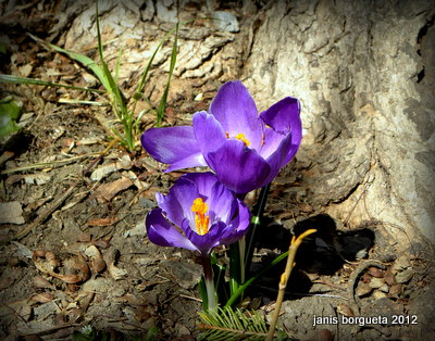 Spring in the Hudson Valley 2014