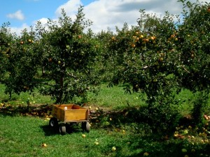 Pumpkins Apples and Hayrides on a Newburgh NY Farm