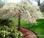 Balmville NY in Springtime 2