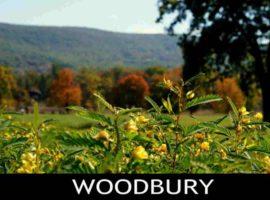Woodbury, NY Homes